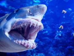 Fear, Sharks, and Life