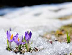 Wildflowers from Winter: My Story